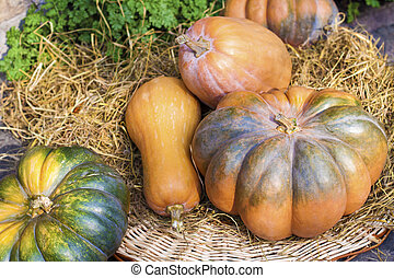 Fresh whole pumpkins of different shapes laying on hay