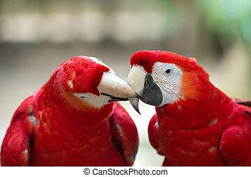 Sügér, madár, Papagáj, ülés