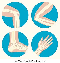 Set of human joints, knee joint, elbow joint, ankle joint,...