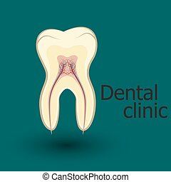 Human tooth emblem, sign or symbol of dental clinic, flat...