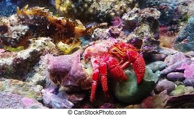 Hermit Crab Under The Sea