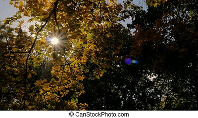 Sun shines rays through tree leaves