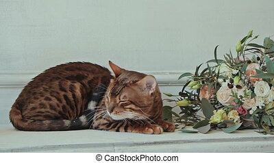 Bengal cat lying near flowers and white wall