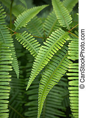 Fern fronds in a rain forest