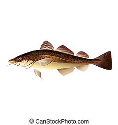Codfish, Isolated Illustration
