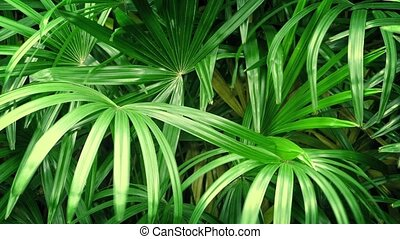 Jungle Plants In Breeze - Closeup of large tropical plants...