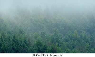 Misty Mountain Forest In Wind - Rugged wilderness forest...