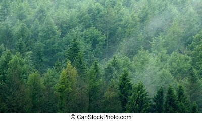 Mist Moving Over Forest Timelapse - Timelapse shot of...
