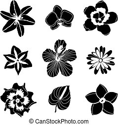 Vector illustration of tropical flowers set