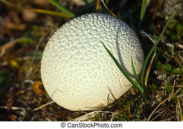 White balls in grass 2. Introduction to Biophysics. First...