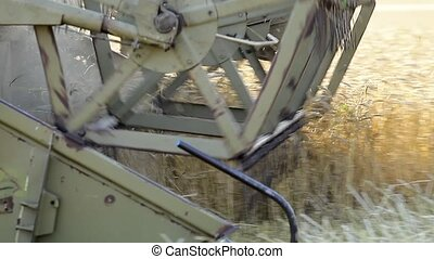 Combine harvests crops - Harvester removes the grass,...