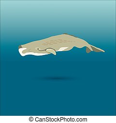 sperm whale vector realistic flat illustration - whale under...