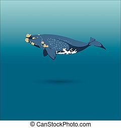 right whale whale vector realistic flat illustration - whale...