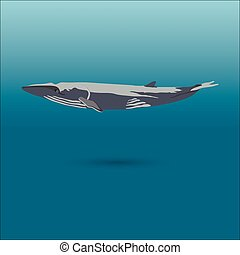 finback whale vector realistic flat illustration - whale...