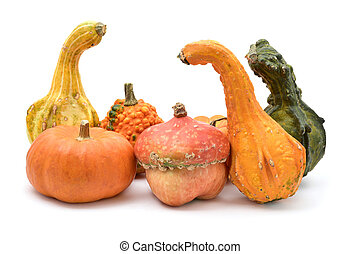 different pumpkins on a white background - an assortment of...