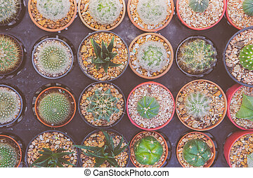 cactus - Top view mini cactus in pot