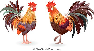 collection of detailed cute roosters for your design
