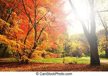 Bright sun shines on autumn  tree