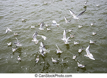 Hungry seagull birds fighting for fish rests