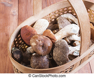 The basket with the collected mushrooms - Mushrooms in...