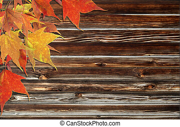 maple leaves and wooden background - Red maple leaves on...