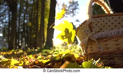 Falling yellow leaves against shining sun and basket. Sunny autumn day. Super slow motion shot