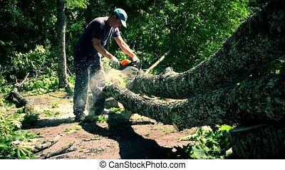 Male worker man sawing felled tree in park.