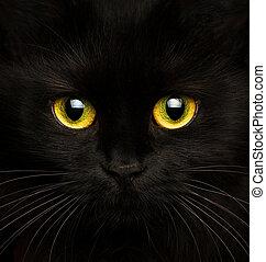 Cute muzzle of a black cat