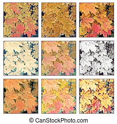autumn maple leaves - Collage from photos of beautiful...
