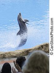 Dolphin - dolphin show in dolphinarium