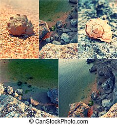 Collage of summer beach images for nature and travel concept illustration. Rocky beach and spiral shells. Toned images