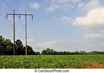 Soy Bean Field - An electrical pole in a sprawling soybean...
