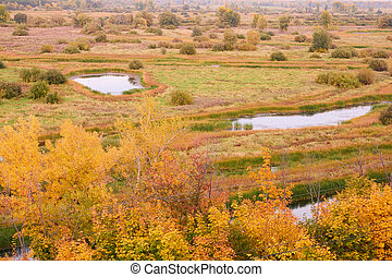 autumn landscape with colourful trees, grass and other vegetation. Beautiful lake view from above.