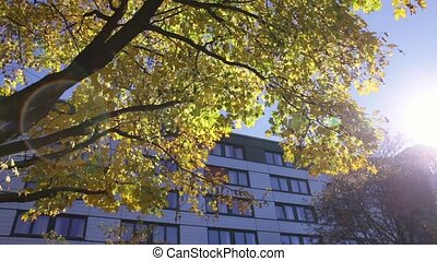 Sun shinning in an Autumn Morning - Colorful yellow leaves...