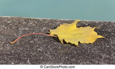 Single Golden Autumn Leaf by the Riverside