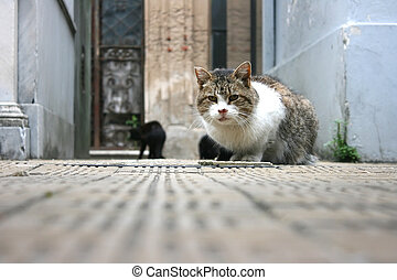 Cat in the Cemetery - A cat sitting in the Cemetery of...