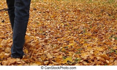 Walking on fall leaves Outdoor with Autumn season nature on...