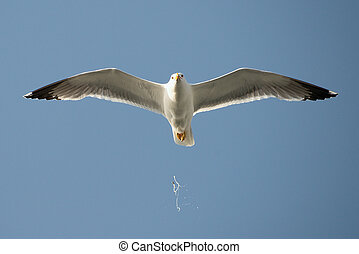 Seagull in flight unleashes bird droppings
