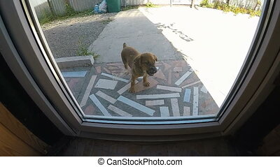 Puppy Outside the door - Dog outside the door want to enter...