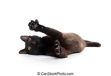 Black cat playing - Cute black cat playing and laying on its...