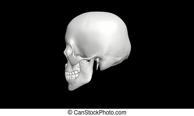 white skull rotation with alpha3d,