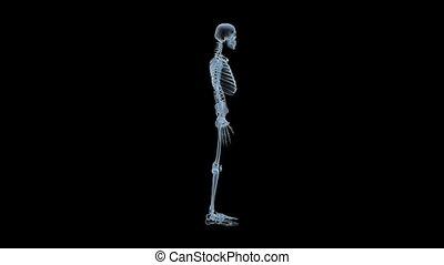 x-ray skeleton rotation loop