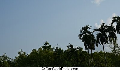Palm tree with blue sky, Timelapse - Palm tree and nature...