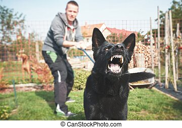 Aggressive dog is barking. Young man with angry black dog on...