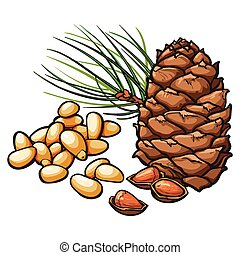 Pine nuts and cone isolated on white background - Peeled and...