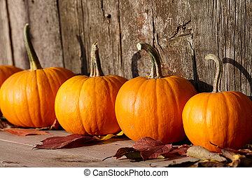 Autumn pumpkins still life