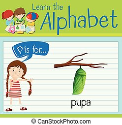 Flashcard letter P is for pupa illustration