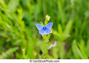 Butterfly on the flower. - A beautiful butterfly on the...