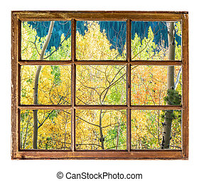 aspen trees window view - Colorado aspen tree in fall colors...