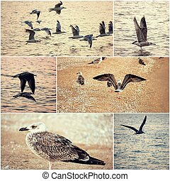 Collage of seagulls on a sea coast set of toned images